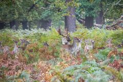 Il re della foresta fotografia stock