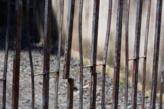 Il recinto della ruggine Fotografia Stock