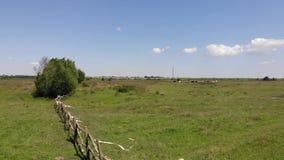 Il recinto di legno primitivo sul bestiame pascola In pascoli distanti un gregge delle mucche, allevamento Movimento lento stock footage