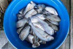 Il recipiente di plastica con le lacune è riempito di pesce fresco thailand fotografie stock libere da diritti