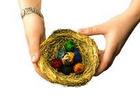 Il regalo di Pasqua con un nido con le piccole uova variopinte su un bianco ha isolato il fondo Fotografie Stock Libere da Diritti