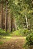 Il Regno Unito, Sherwood Forest, Nottinghamshire ad ottobre immagini stock