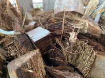 Il residuo di stoffa secco della noce di cocco del residuo della noce di cocco per la piantatura degli alberi, assorbe l'acqua fotografia stock libera da diritti