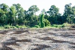 Il resti è stato bruciato per bruciare la paglia di riso lasciata ma ceneri riempito immagini stock libere da diritti