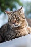 Il resto del gatto Fotografie Stock