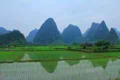 Il Ricefields della Cina Immagine Stock