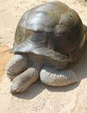 Il rilassamento di una tartaruga Fotografia Stock Libera da Diritti
