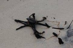 Il rimanere dell'albero è lavato e sepolto nella spiaggia Fotografie Stock
