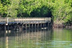 Il rimboschimento della mangrovia in Petchaburi Fotografia Stock