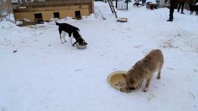 Il riparo animale, cani mangia dalle ciotole stock footage