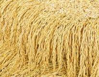 Il riso è alimenti alti in carboidrato fotografia stock libera da diritti