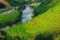 Il riso del terrazzo sistema il Vietnam Immagini Stock Libere da Diritti