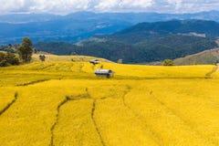 Il riso fatto un passo ha archivato in Chiang Mai, Tailandia del Nord Immagine Stock