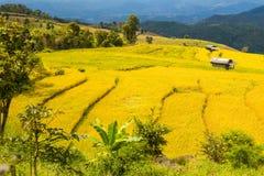 Il riso fatto un passo ha archivato in Chiang Mai, Tailandia del Nord Fotografia Stock Libera da Diritti