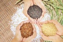 Il riso nero, marrone e dorato tenuto in tre consegna il fondo del riso bianco Immagine Stock