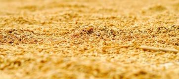 Il riso si asciuga sul tetto Macro Fotografia Stock Libera da Diritti
