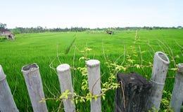 Il riso sistema, paesaggio scenico del Bali, Asia Immagini Stock Libere da Diritti
