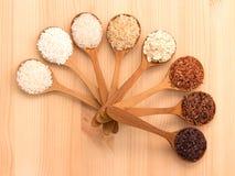 Il riso tailandese del carico è la creazione dei eaperts e del Jap tailandesi del riso Immagini Stock