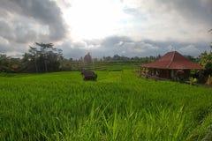 Il riso verde ricco ha fatto un passo campi Terrazzi tradizionali del riso di balinese Casa di legno alla destra e giungle su fon fotografie stock libere da diritti