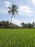 il riso verde sistema la villa bali Immagini Stock Libere da Diritti