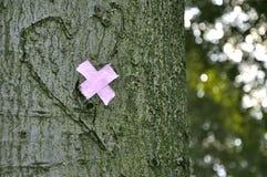 Il rispetto, guarisce la natura Fotografie Stock Libere da Diritti