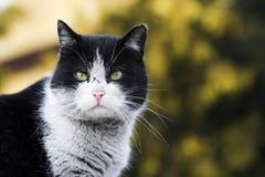 Il ritratto del gatto Immagini Stock