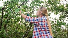 Il ritratto del taglio della giovane donna si ramifica sopra di melo in giardino fotografie stock