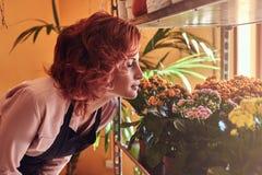 Il ritratto di un fiorista femminile sensuale, respira un odore piacevole dei fiori freschi Fotografie Stock Libere da Diritti