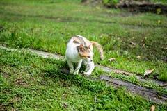Il ritratto di un gatto grazioso sta sedendosi su una terra fotografia stock libera da diritti