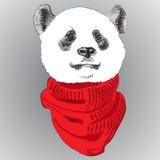 Il ritratto di un panda dentro tricotta la sciarpa Immagine Stock