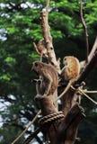 Il ritratto di una scimmia si siede nel tronco fotografia stock libera da diritti