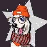 Il ritratto di vettore del cane del husky siberiano porta il beanie, i vetri e la sciarpa Isolato sulla stella e sulla neve Skect Fotografia Stock Libera da Diritti