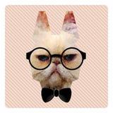 Il ritratto poligonale di modo del gatto dei pantaloni a vita bassa sul rosa barra Backgr Illustrazione di Stock