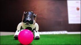Il robot bianco del cane si avvicina lentamente alla palla del giocattolo archivi video