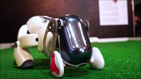 Il robot del cane di animale domestico prende un giocattolo in bocca stock footage