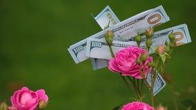Il rosa è aumentato metraggio del hd del dollaro dei soldi del fiore nessuno stock footage