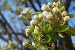 il rosa delicato fantastico fiorisce il bello fondo dell'estate Fotografia Stock
