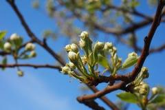 il rosa delicato fantastico fiorisce il bello fondo dell'estate Immagine Stock