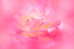 Il rosa e la natura gialla molle dei petali rosa sottraggono il fondo Fotografia Stock Libera da Diritti