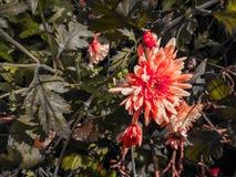 Il rosa, fiore giallo fotografia stock