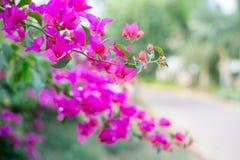 Il rosa fiorisce il fondo - profondità bassa del fuoco Fotografie Stock Libere da Diritti