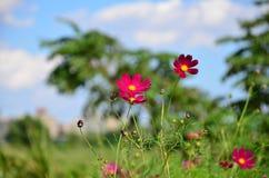 Il rosa fiorisce l'autunno fotografia stock