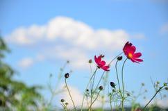 Il rosa fiorisce l'autunno fotografie stock