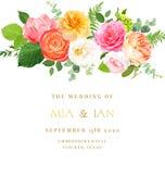 Il rosa, rosa gialla e fucsia, ranunculus arancio, giardino del juliet è aumentato illustrazione di stock