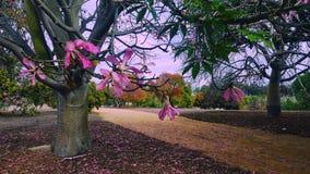 Il rosa ha fiorito l'albero Immagine Stock Libera da Diritti