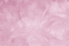 Il rosa mette le piume al fondo - foto di riserva fotografia stock libera da diritti