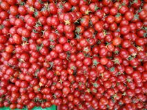 Il rosso dei pomodori ciliegia mostra che quanto fresco sono fotografie stock
