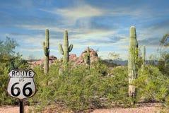 Il rosso favoloso del cactus del paesaggio di Route 66 oscilla il bello deserto dell'Arizona del tramonto immagine stock