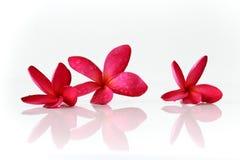 Il rosso fiorisce la stazione termale Fotografie Stock Libere da Diritti