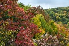 Il rosso luminoso lascia nel fuoco molle, fondo di autunno Fotografia Stock
